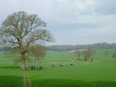 Spring 2014: Field near Fittleworth